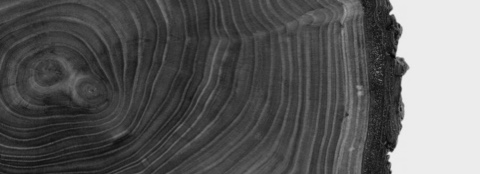 Black-and-white close-up of a tree stump, showing the rings.